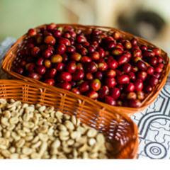 Spezielle Kaffeesorten aus Peru