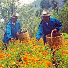 Kosmetikprodukte aus der peruanischen Biodiversität