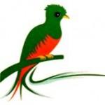 Pajarillo Verde