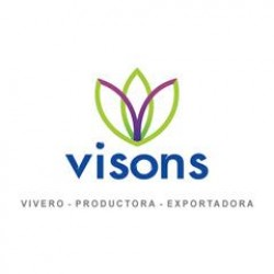 Vison's